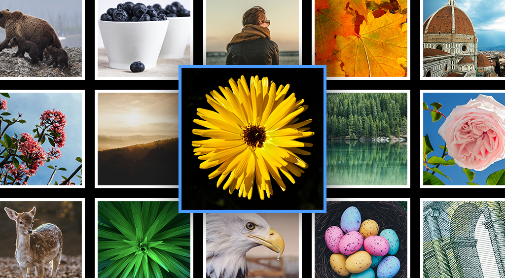 Use Lightbox Gallery to make an impact